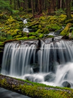 Unamed Falls-Sol Duc Rainforest-JCHP-0297